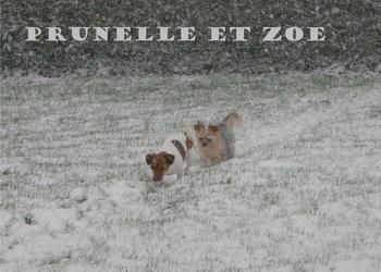 Fabienne Crochelet - Vétérinaire - Galerie photos - Nos animaux